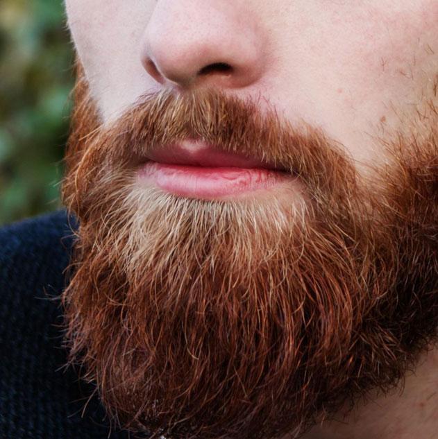 greffe-barbe-tarif